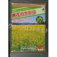 送料無料 緑肥 からしな 黄花のちから  1kg タキイ種苗(株)