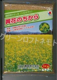 [緑肥] からしな 黄花のちから  1kg タキイ種苗(株)