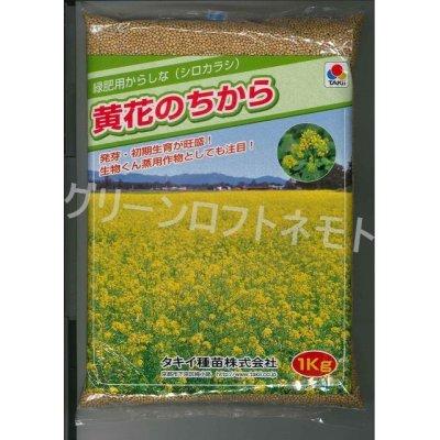 画像1: [緑肥] からしな 黄花のちから  1kg タキイ種苗(株)