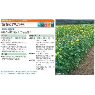画像2: [緑肥] からしな 黄花のちから  1kg タキイ種苗(株)