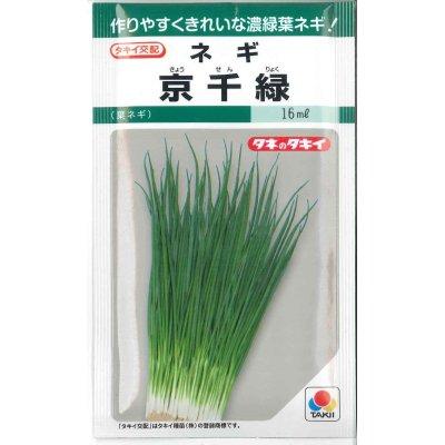 画像2: シーダー種子 ネギ 京千緑 1粒×1cm間隔×200m