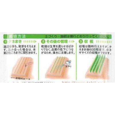画像2: [ねぎ] 京千緑 2dl タキイ種苗