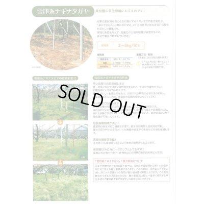 画像4: [緑肥] オオナギナタガヤ 1kg 雪印種苗株式会社