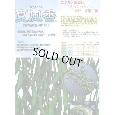 画像2: [枝豆] 夏風香 70ml 雪印種苗
