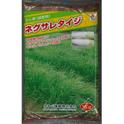 画像1: [緑肥] アウェナ ストリゴサ ネグサレタイジ 1kg タキイ種苗(株)