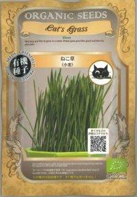 [有機種子] ねこ草(小麦)グリーンフィールド 30g