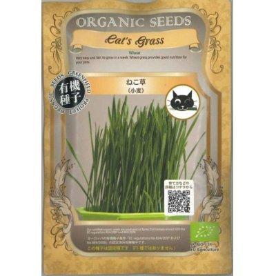 画像1: [有機種子] ねこ草(小麦)グリーンフィールド 30g