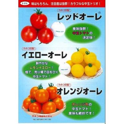 画像3: [トマト/中玉トマト] オレンジオーレ 20粒 カネコ交配