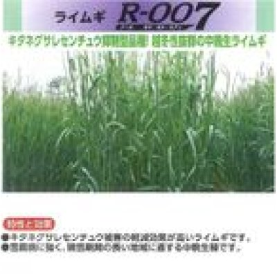 画像2: [緑肥] ライ麦 R-007 1kg  雪印種苗