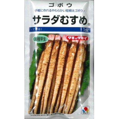 画像1: [牛蒡] サラダむすめ (てがるゴボウ) 1dl タキイ種苗