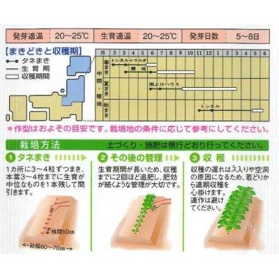 画像2: [牛蒡] サラダむすめ (てがるゴボウ) 1dl タキイ種苗