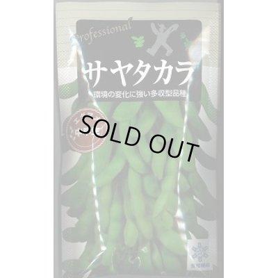 画像1: [枝豆] サヤタカラ 70ml 雪印種苗