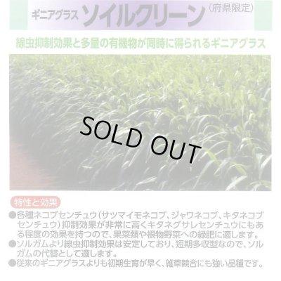 画像3: 緑肥 ソイルクリーン 1kg 雪印種苗株式会社