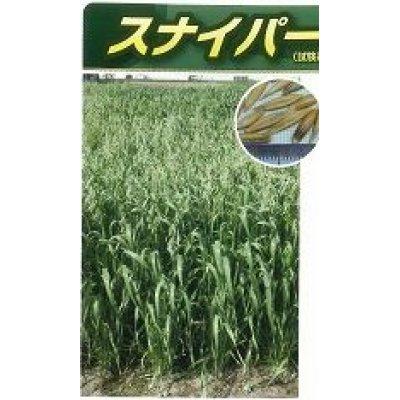 画像2: [緑肥] エンバク スナイパー 1kg   雪印種苗