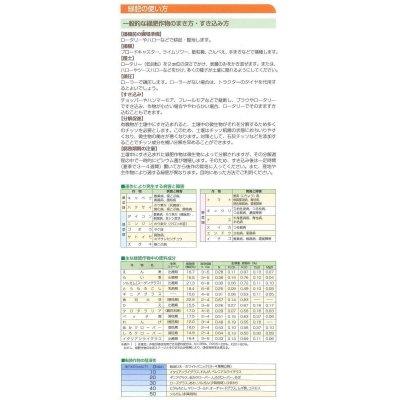 画像4: [緑肥] 大根 コブ減り大根 1kg タキイ種苗(株)