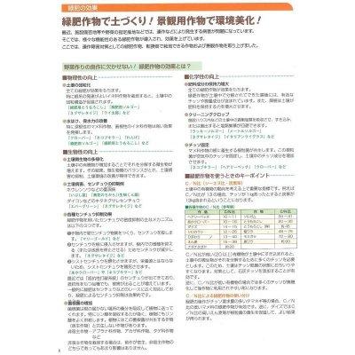 画像3: [緑肥] 大根 コブ減り大根 1kg タキイ種苗(株)