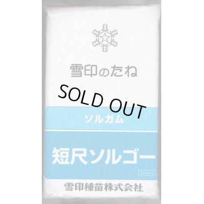 画像1: [緑肥] 短尺ソルゴー 1kg  雪印種苗株式会社