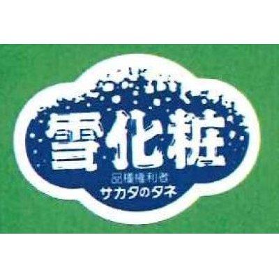 画像1: 青果シール かぼちゃ 雪化粧 1000枚 サカタのタネ