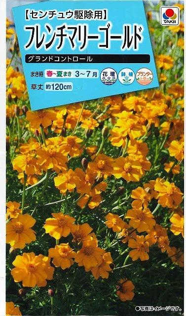 花種 小袋 フレンチマリーゴールド グランドコントロール L タキイ交配 花種 花種 小袋 春まき グリーンロフトネモト直営